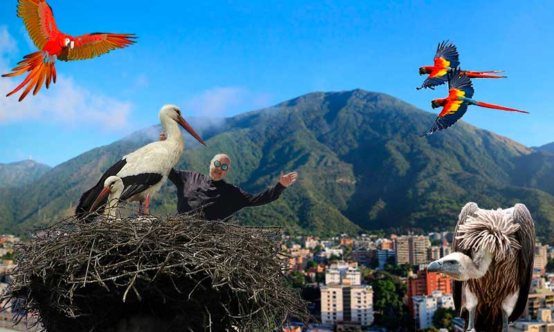 El Cl-Audio de Nazoa: Las aves de Caracas (Audio)